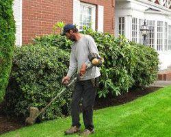 Gardening Services Paddington