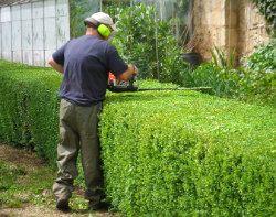 Gardener Paddington