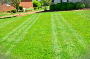 grass-cutting-london